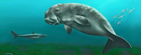 Rekonstruktion der 28 Mio. Jahre alten Ratinger Seekuh und ihres Lebensraumes (Bild: Denise Seimet)